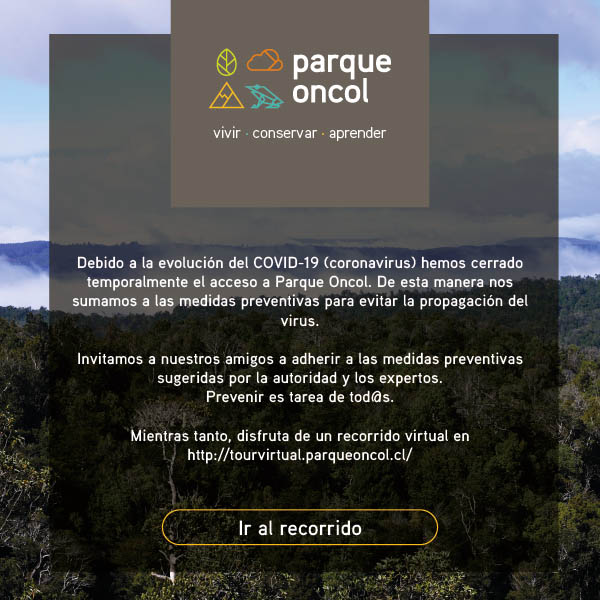 Tour Virtual oncol 360